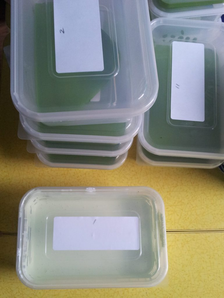 Numbered, lidded pots of paint.