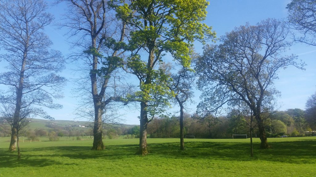 A fabulously frugal picnic at Towneley Park, Burnley.