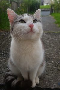 Our cat Stinky, before she moved in with us.