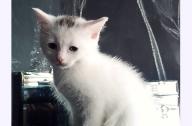 Cleaning up kitten wee cheaply and effectively is on my list of frugal things I've done for this week!