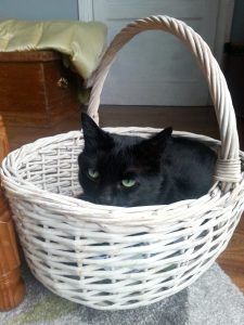 My cat Vader - he loves basket rides.